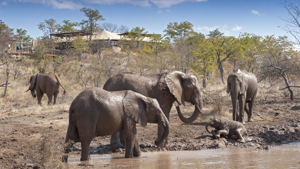 Elefanten, The Elephant Camp, Simbabwe Rundreise