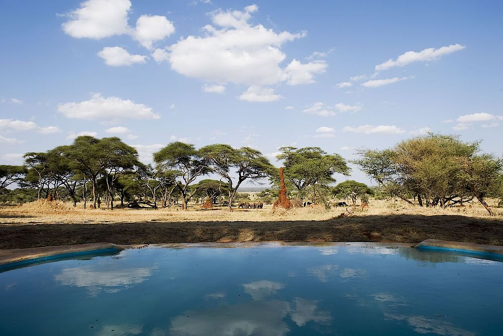 Luxusreise Tansania, Pool mit Aussicht, Sanctuary Swala Camp, Tarangire Nationalpark, Tansania Reise