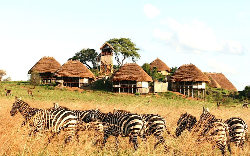 Rundreise Uganda, Zebras vor der Apoka Safari Lodge, Kidepo Valley Nationalpark, Uganda